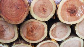 ドイツ(シュバルツバルト)からのもみの木の販売、取り扱いを終了いたしました