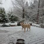 雪の千早赤阪村